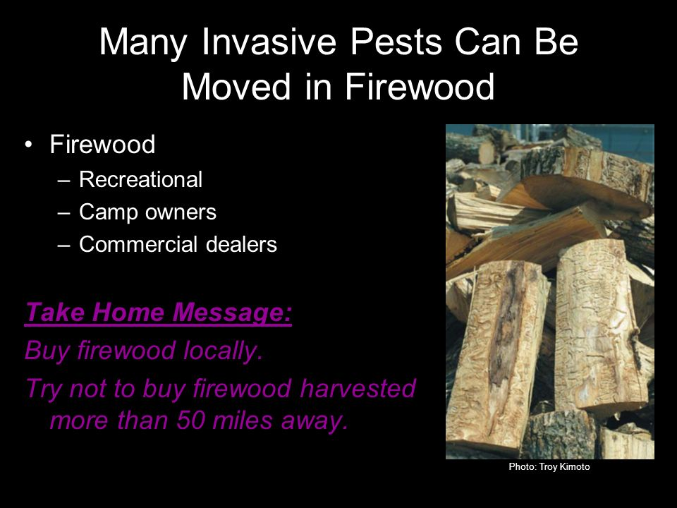 Firewood –Recreational –Camp owners –Commercial dealers Take Home Message: Buy firewood locally.