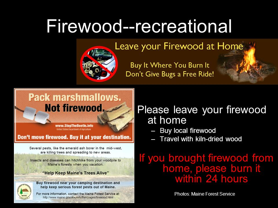 Firewood--recreational Please leave your firewood at home –Buy local firewood –Travel with kiln-dried wood If you brought firewood from home, please burn it within 24 hours Photos: Maine Forest Service