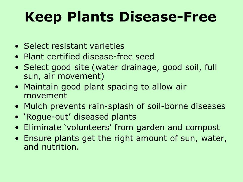 Keep Plants Disease-Free Select resistant varieties Plant certified disease-free seed Select good site (water drainage, good soil, full sun, air movem