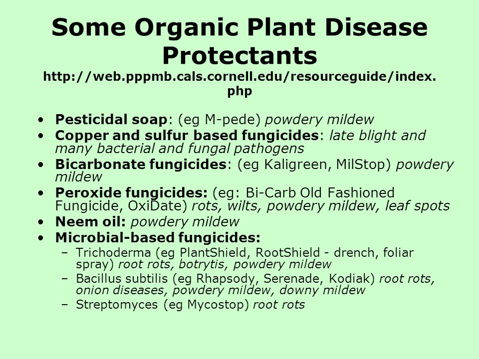 Some Organic Plant Disease Protectants http://web.pppmb.cals.cornell.edu/resourceguide/index. php Pesticidal soap: (eg M-pede) powdery mildew Copper a