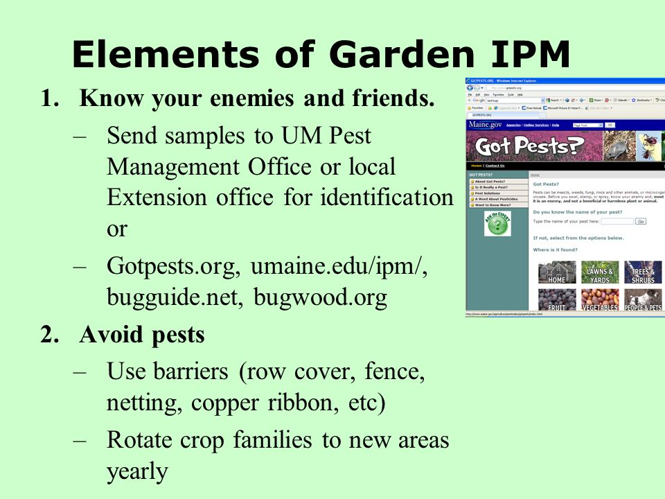 Elements of Garden IPM 1.Know your enemies and friends. –Send samples to UM Pest Management Office or local Extension office for identification or –Go
