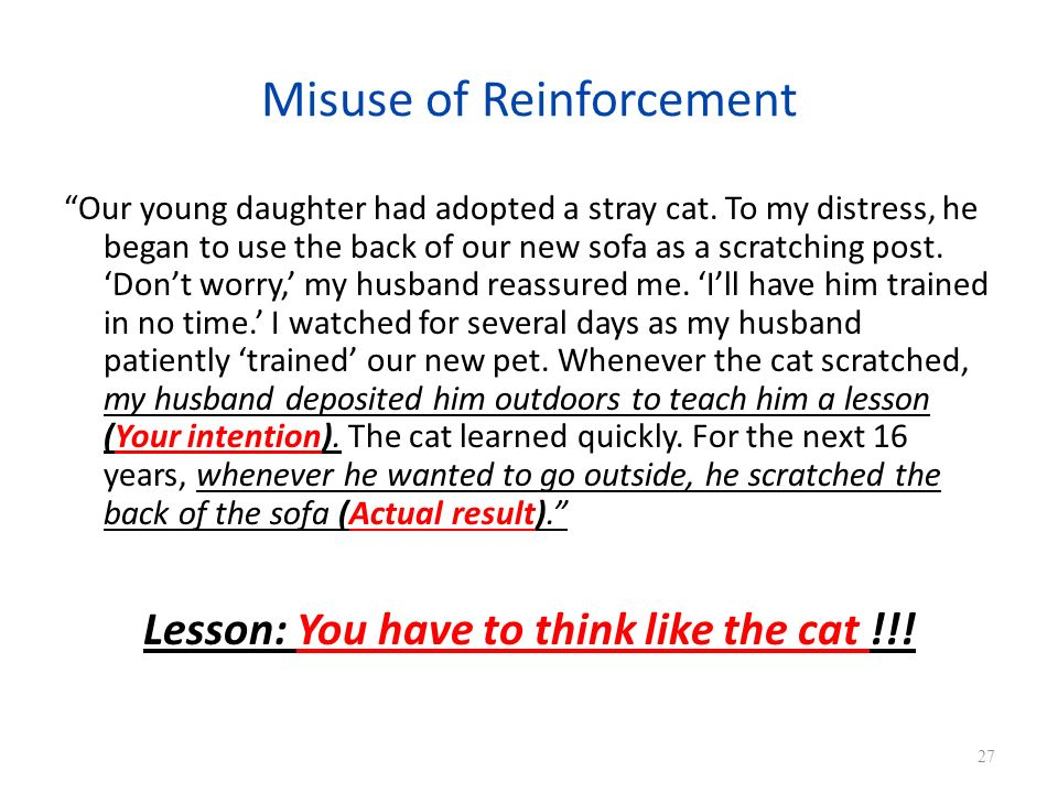 Misuse of Reinforcement Our young daughter had adopted a stray cat.