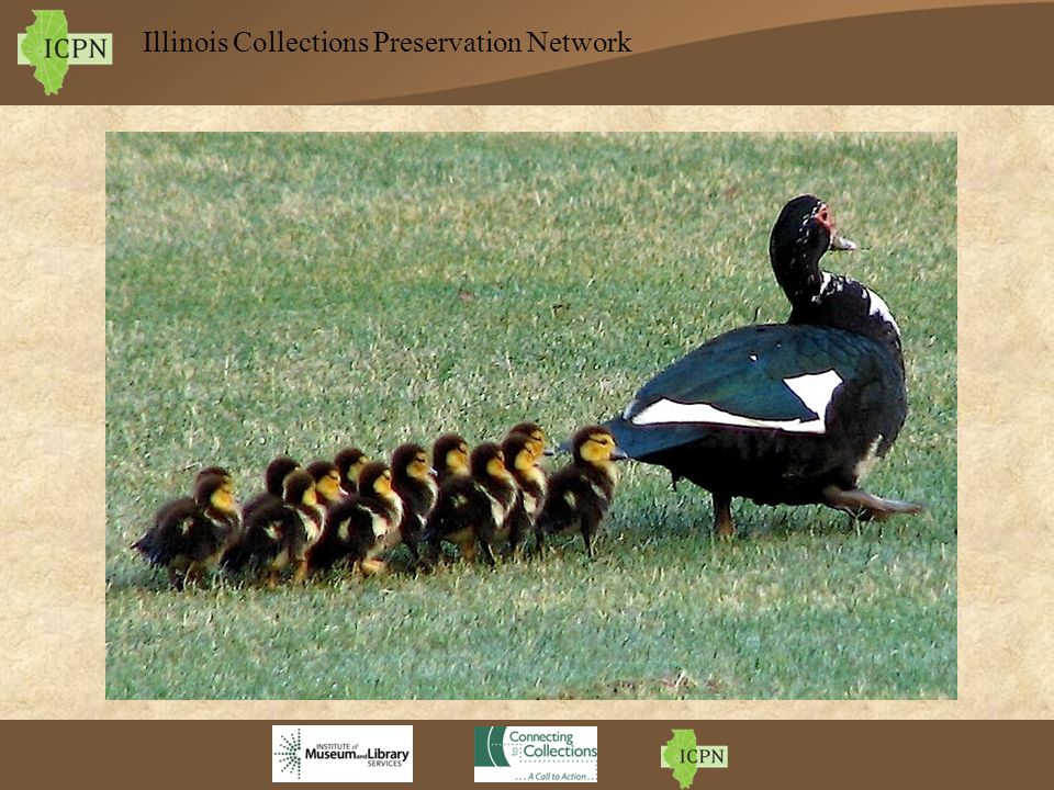 Illinois Collections Preservation Network