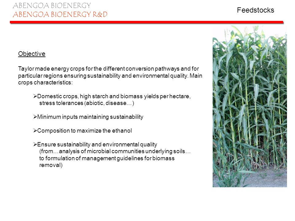 ABENGOA BIOENERGY ABENGOA BIOENERGY R&D Cereal technology – current situation All Abengoa Bioenergy plants are currently running on cereals Yields varying depending on cereal used DDGs produced containing 30% protein and 10% humidity Cereal technology – Future situation Objective Increase competitiveness of the production facilities.