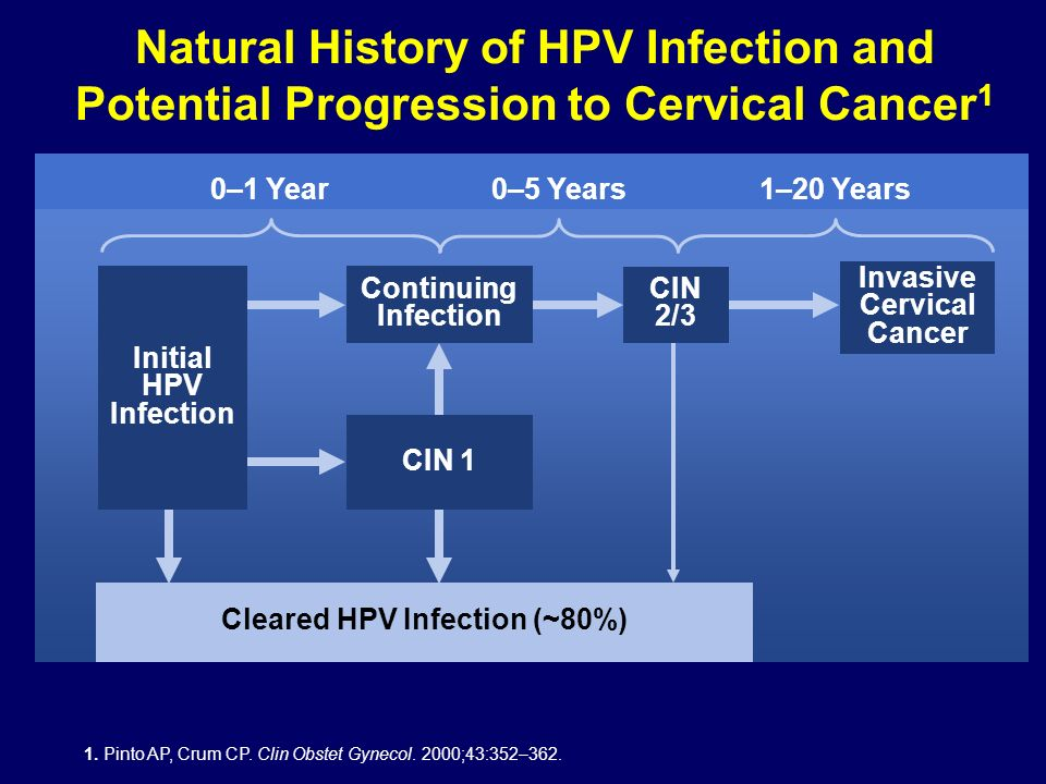 0–1 Year0–5 Years1–20 Years Invasive Cervical Cancer Cleared HPV Infection (~80%) 1. Pinto AP, Crum CP. Clin Obstet Gynecol. 2000;43:352–362. CIN 1 In