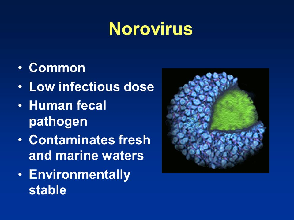 Norovirus Common Low infectious dose Human fecal pathogen Contaminates fresh and marine waters Environmentally stable