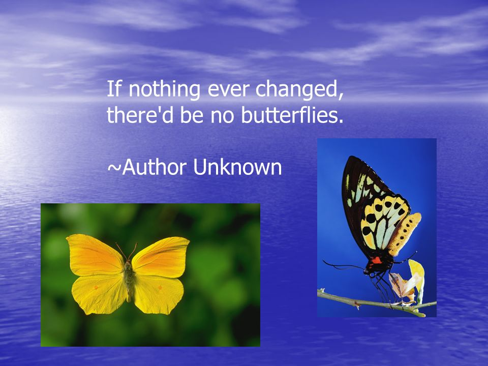 If nothing ever changed, there'd be no butterflies. ~Author Unknown