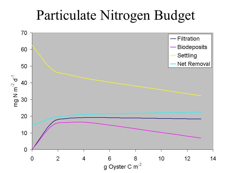 Particulate Nitrogen Budget
