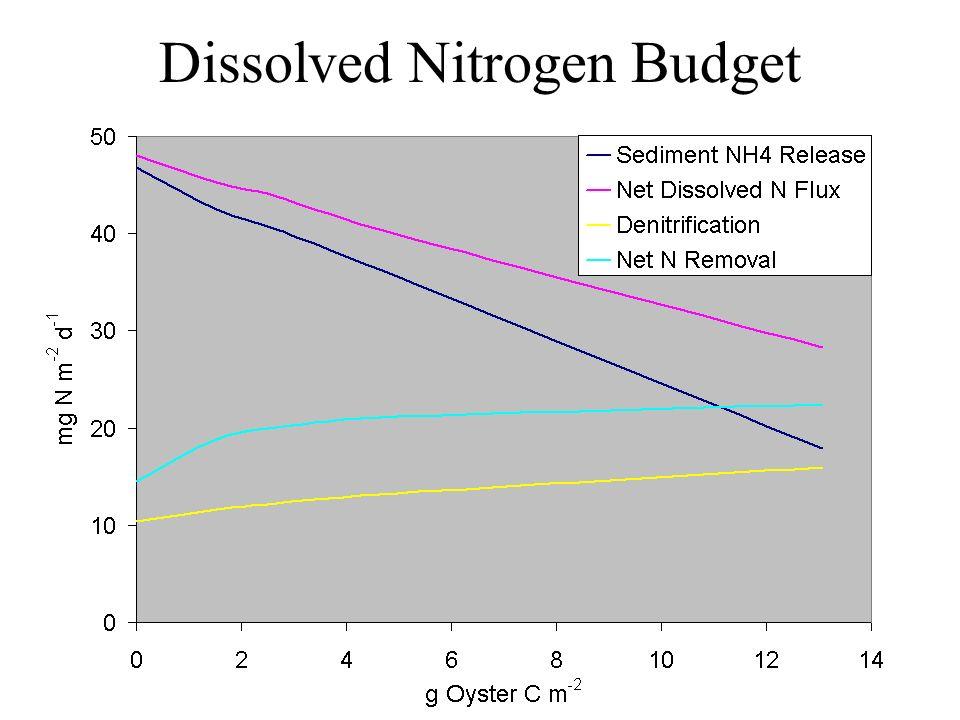Dissolved Nitrogen Budget