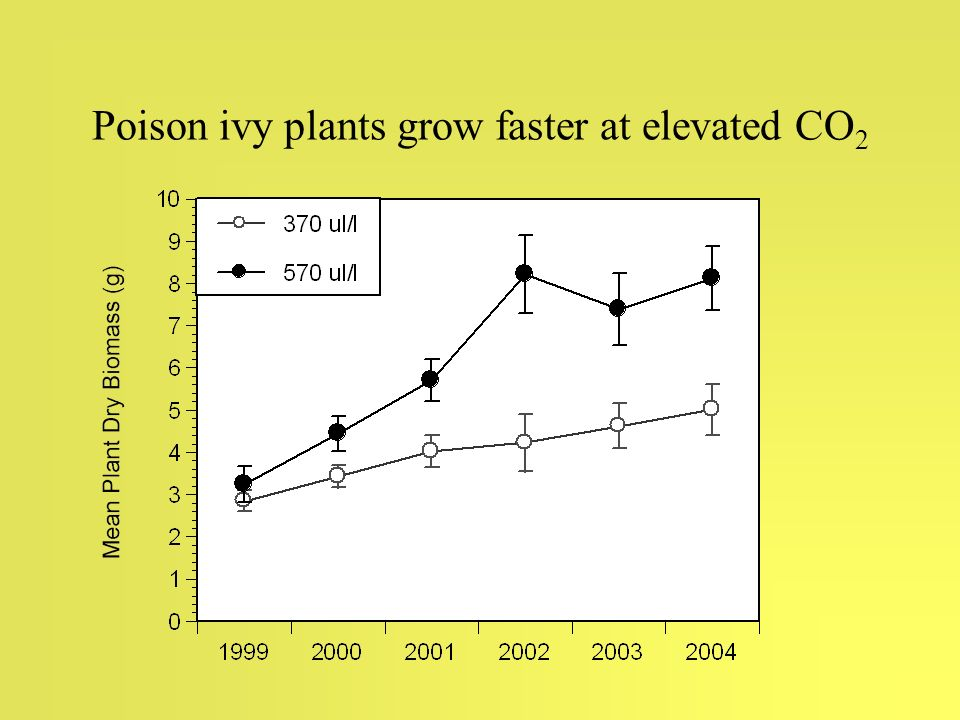Poison ivy plants grow faster at elevated CO 2