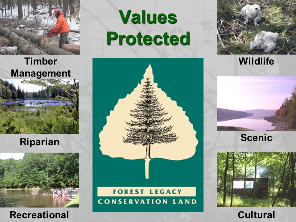 Values Protected WildlifeTimber Management Riparian Scenic RecreationalCultural