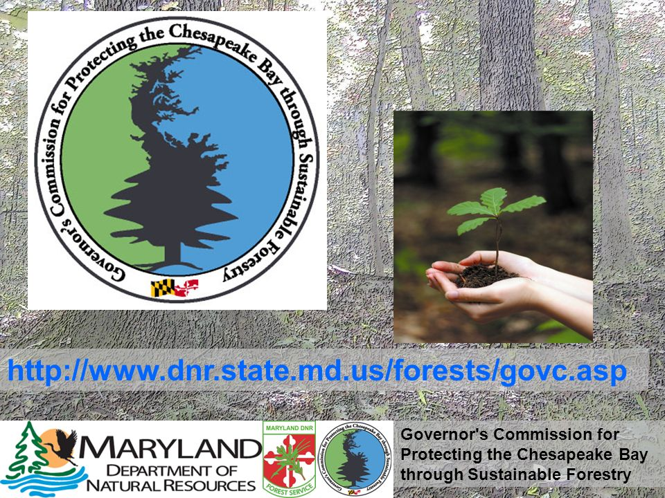 Governor's Commission for Protecting the Chesapeake Bay through Sustainable Forestry http://www.dnr.state.md.us/forests/govc.asp