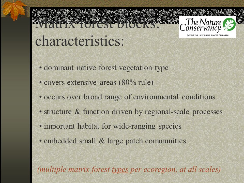Matrix forest blocks: characteristics: dominant native forest vegetation type covers extensive areas (80% rule) occurs over broad range of environment