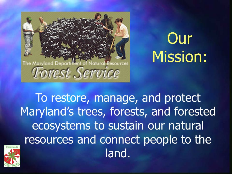 Forest Products Utilization & Marketing Provides technical assistance/liaison to forest industry and local government with forestry related policy issues; Develops strategies to achieve higher utilization of forest resources; Improves environmental quality protection for industry activities, and; Provides required professional education for those who work in the forestry sector.
