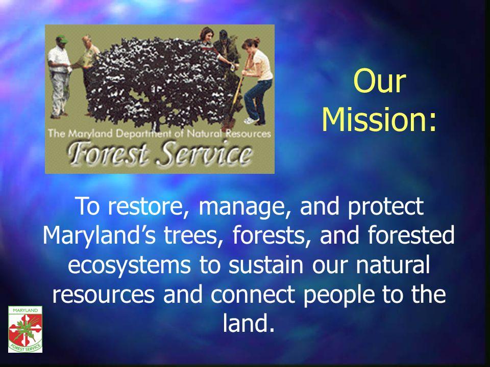 Forest Product Utilization & Marketing DRider