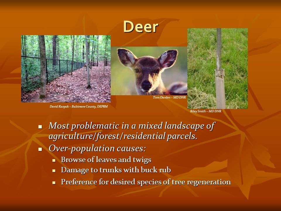 Deer Most problematic in a mixed landscape of agriculture/forest/residential parcels.
