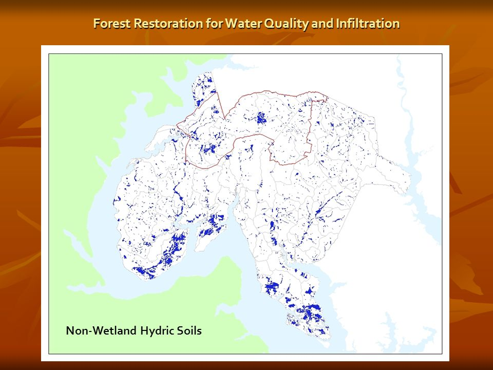 Non-Wetland Hydric Soils Forest Restoration for Water Quality and Infiltration