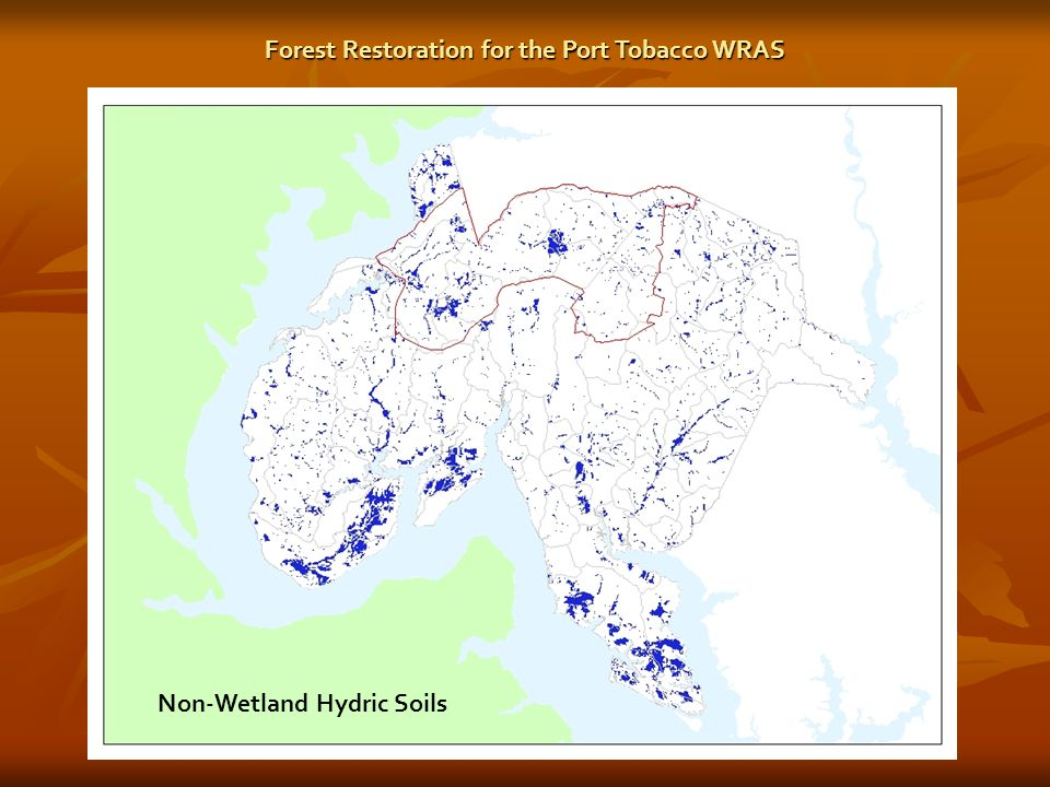 Non-Wetland Hydric Soils Forest Restoration for the Port Tobacco WRAS
