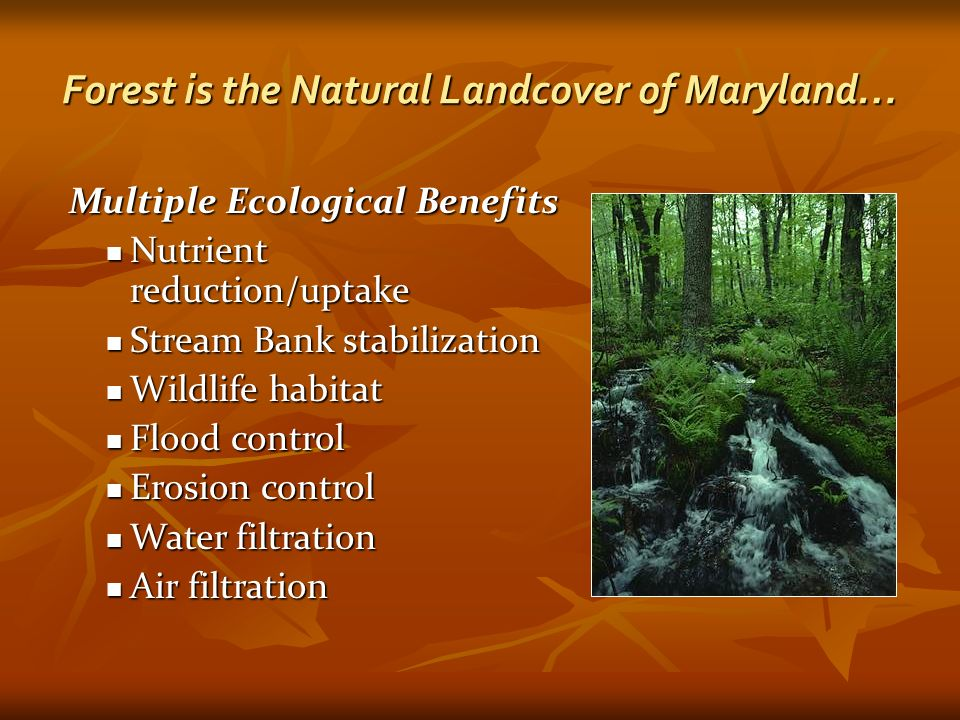 Multiple Ecological Benefits Nutrient reduction/uptake Nutrient reduction/uptake Stream Bank stabilization Stream Bank stabilization Wildlife habitat Wildlife habitat Flood control Flood control Erosion control Erosion control Water filtration Water filtration Air filtration Air filtration Forest is the Natural Landcover of Maryland…