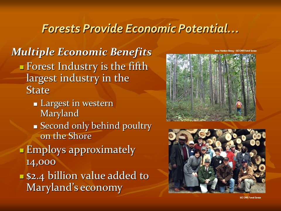 Forests Provide Economic Potential… Multiple Economic Benefits Forest Industry is the fifth largest industry in the State Forest Industry is the fifth largest industry in the State Largest in western Maryland Largest in western Maryland Second only behind poultry on the Shore Second only behind poultry on the Shore Employs approximately 14,000 Employs approximately 14,000 $2.4 billion value added to Marylands economy $2.4 billion value added to Marylands economy Anne Hairston-Strang – MD DNR Forest Service MD DNR Forest Service