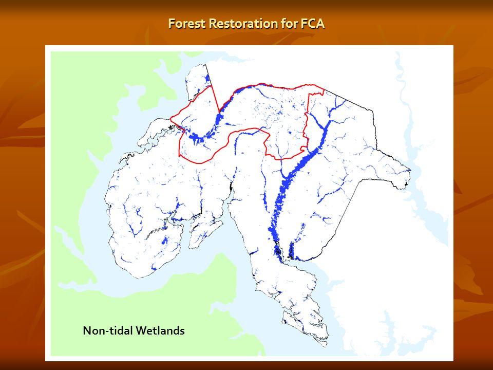 Non-tidal Wetlands