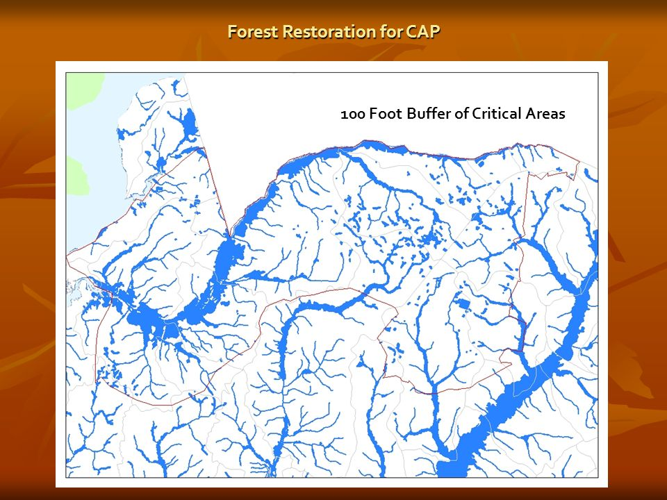 100 Foot Buffer of Critical Areas Forest Restoration for CAP