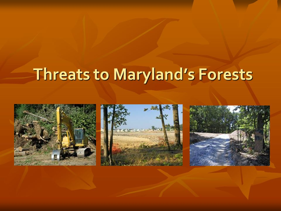 Threats to Marylands Forests