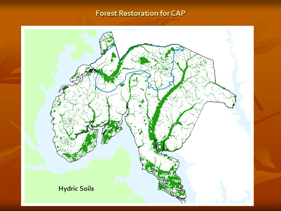 Hydric Soils Forest Restoration for CAP