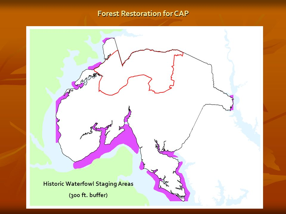Historic Waterfowl Staging Areas (300 ft. buffer) Forest Restoration for CAP