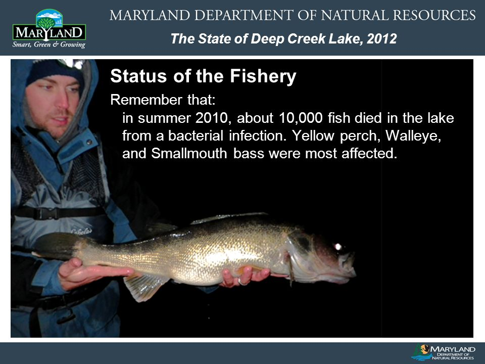 The State of Deep Creek Lake, 2012 Status of the Fishery Remember that: in summer 2010, about 10,000 fish died in the lake from a bacterial infection.