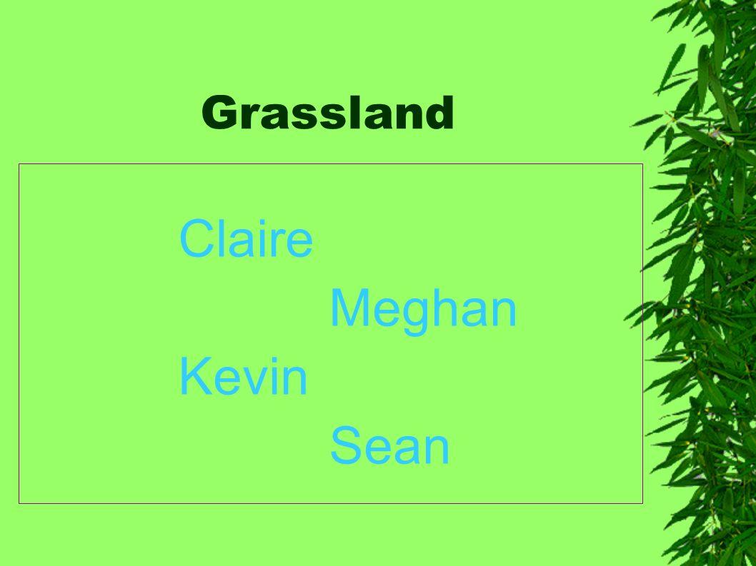 Grassland Claire Meghan Kevin Sean