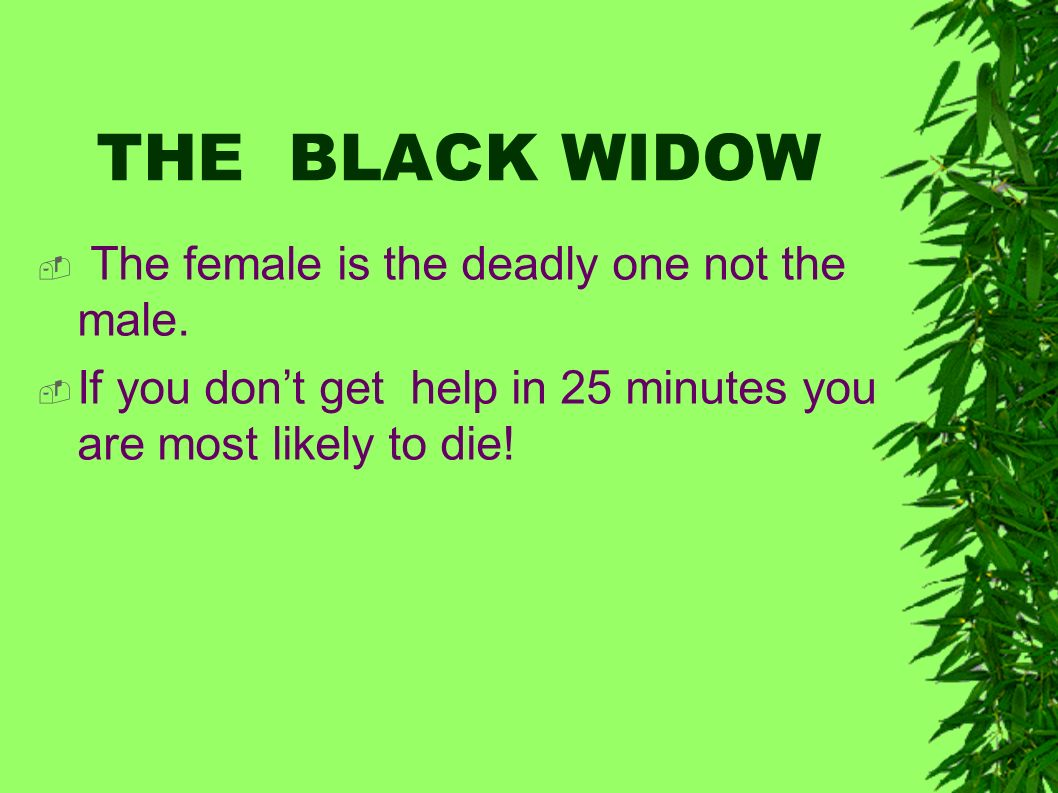 THE BLACK WIDOW The female is the deadly one not the male.