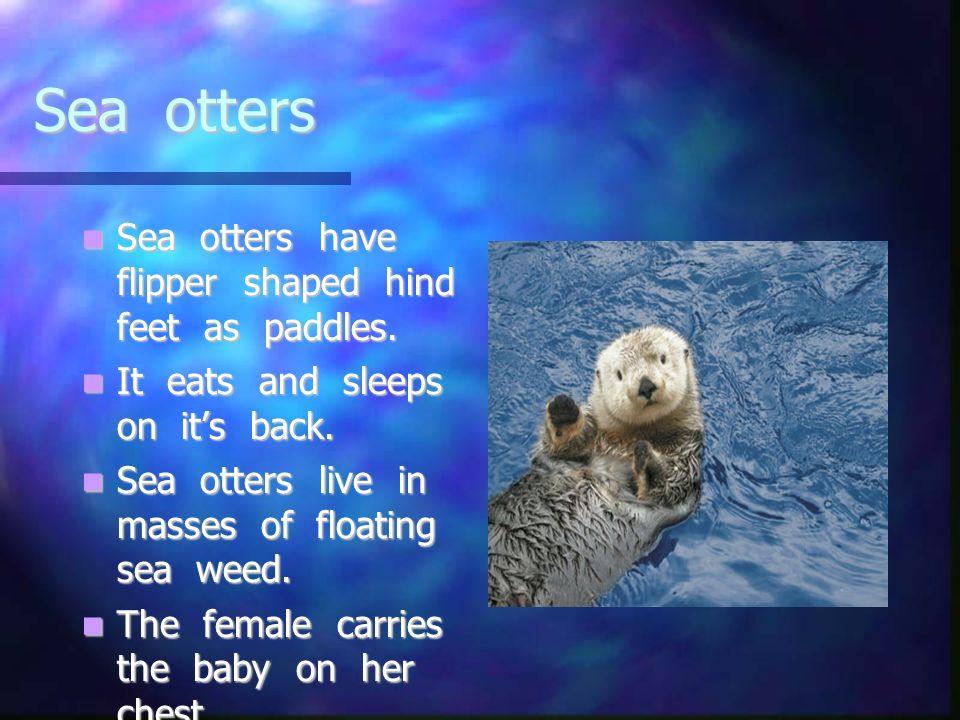 Sea otters Sea otters have flipper shaped hind feet as paddles. Sea otters have flipper shaped hind feet as paddles. It eats and sleeps on its back. I