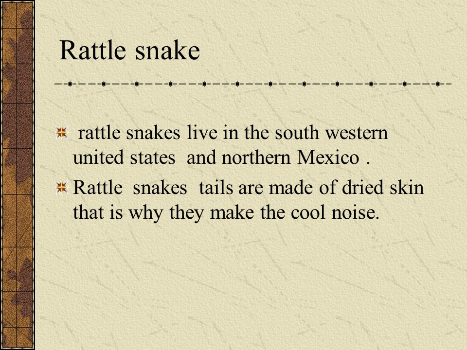 Rattle snake A rattle snakes are predators. They are omnivore they eat rodents and lizards.