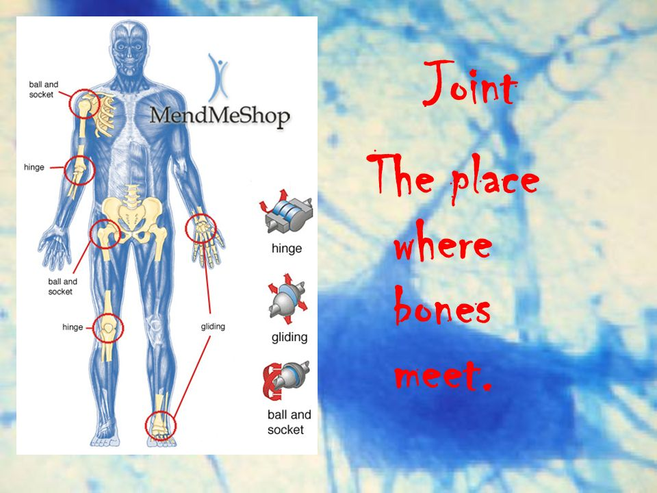 Joint The place where bones meet.