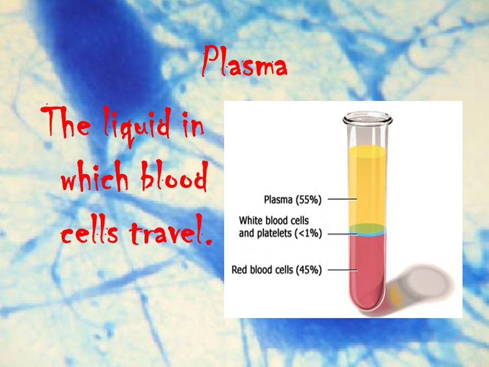 Plasma The liquid in which blood cells travel.