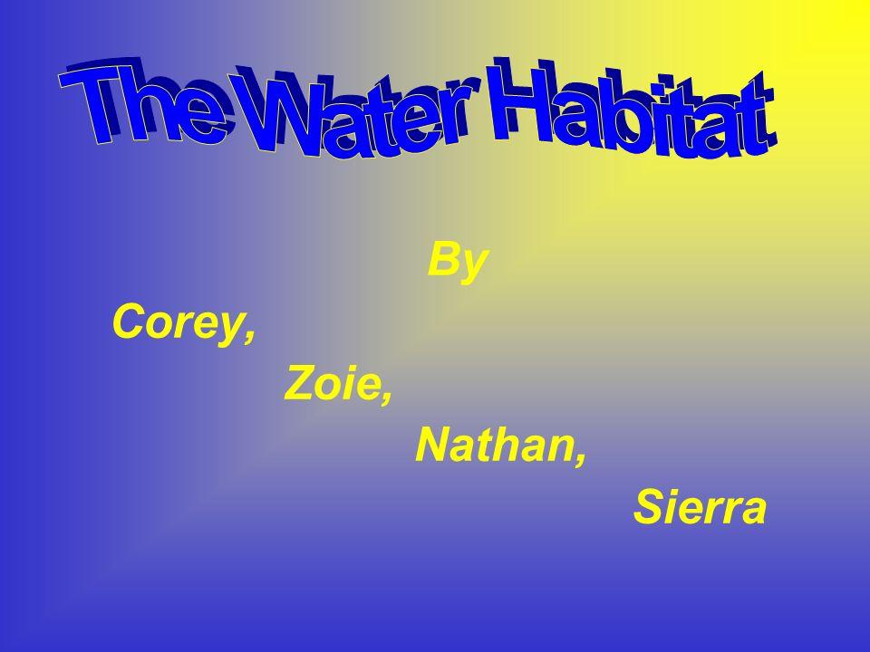 By Corey, Zoie, Nathan, Sierra
