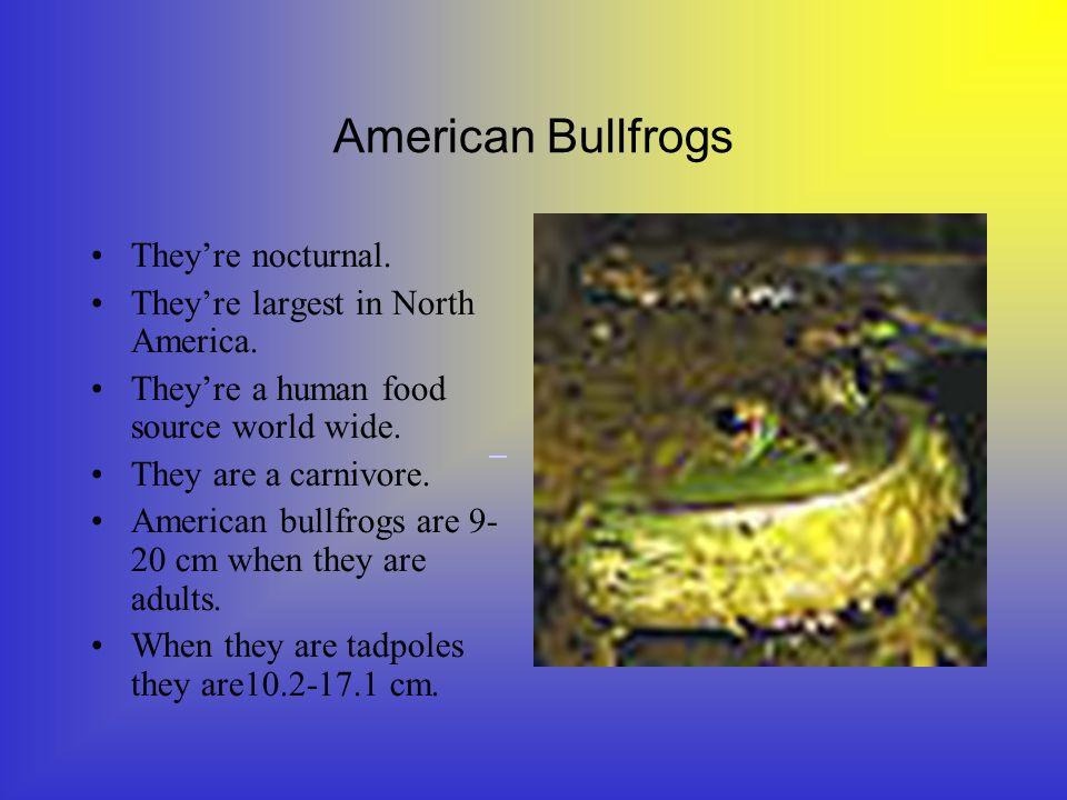 American Bullfrogs American bullfrogs live in, Nova Scotia, Canada, United States, Mexico, Cuba, Europe, South America, and Asia.