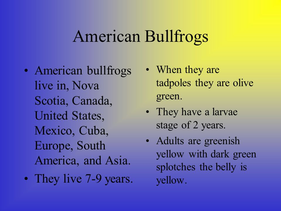 American Bullfrogs American bullfrogs live in, Nova Scotia, Canada, United States, Mexico, Cuba, Europe, South America, and Asia.