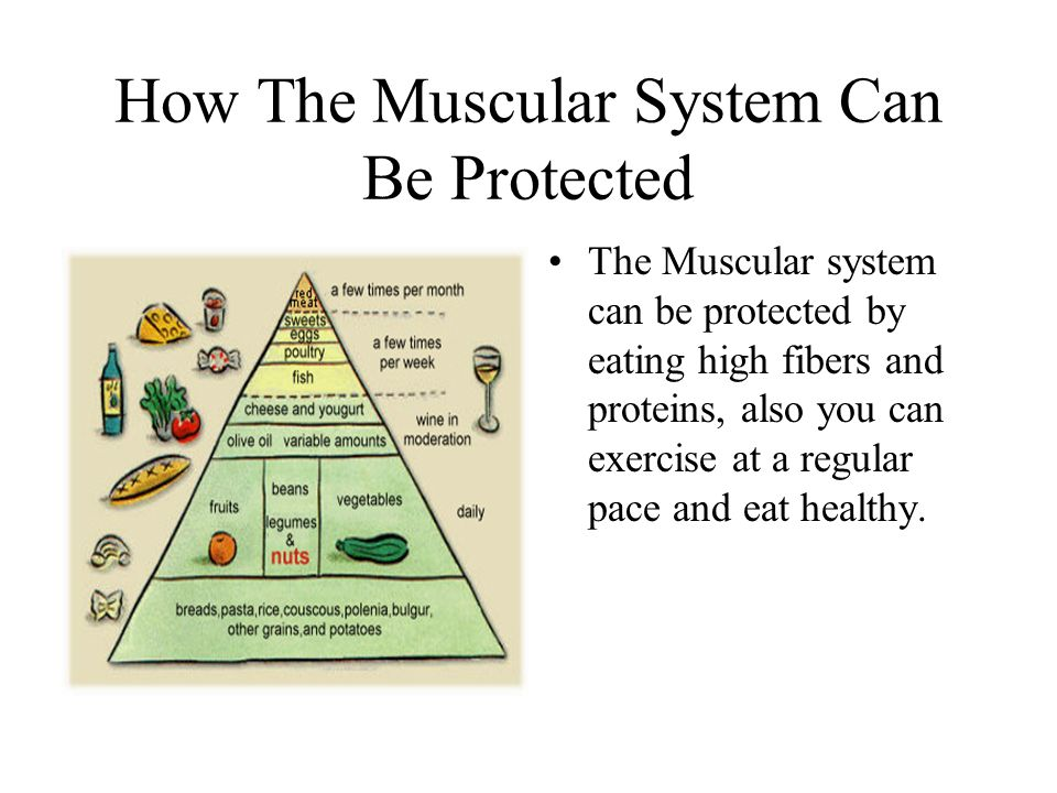 How The Muscular System Can Be Protected The Muscular system can be protected by eating high fibers and proteins, also you can exercise at a regular pace and eat healthy.