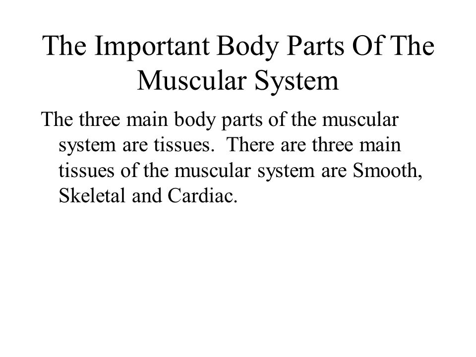 The Important Body Parts Of The Muscular System The three main body parts of the muscular system are tissues.
