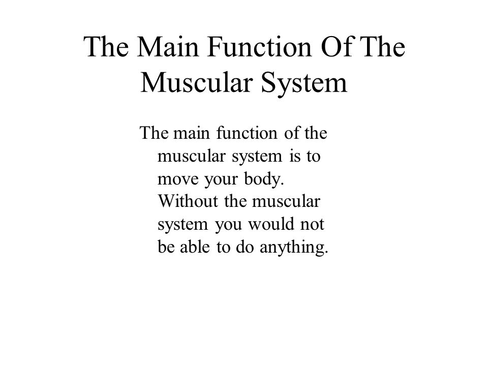 The Main Function Of The Muscular System The main function of the muscular system is to move your body.
