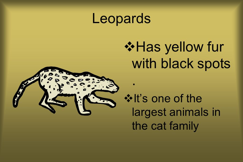 Leopards Has yellow fur with black spots. Its one of the largest animals in the cat family