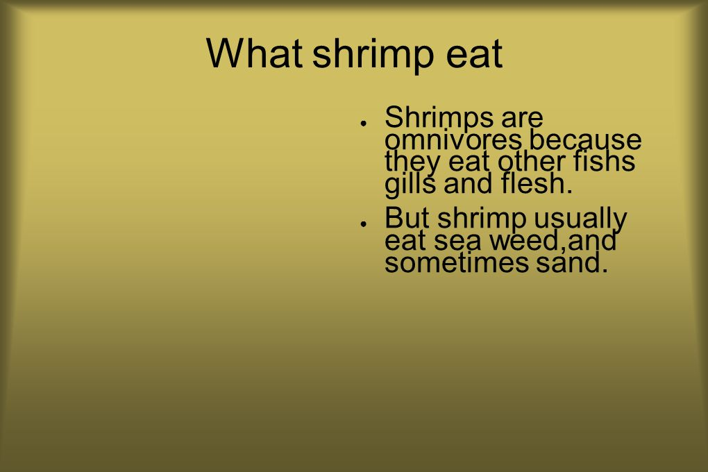 What shrimp eat Shrimps are omnivores because they eat other fishs gills and flesh.
