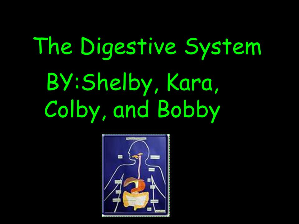 The main organs of the digestive system The main organs of the digestive system are, the large intestine and the small intestine.