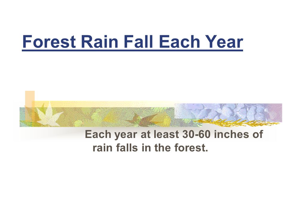 Forest Rain Fall Each Year Each year at least 30-60 inches of rain falls in the forest.