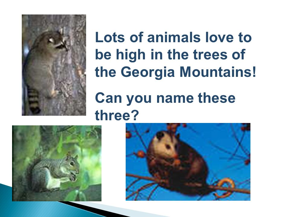 Box Turtles and Copperhead Snakes are two reptiles which live in this mountain habitat. Can you think of a reason why these two would be perfectly at