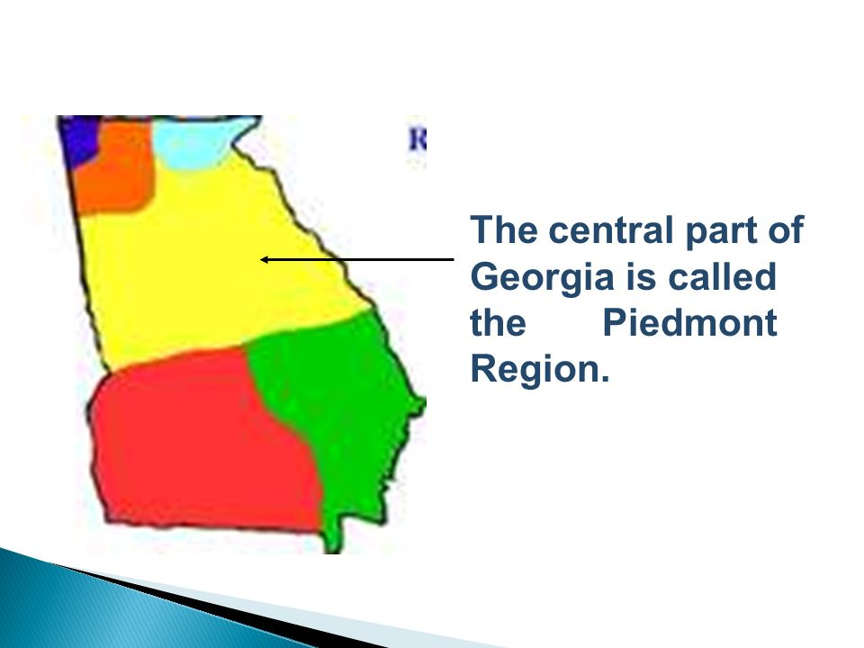 In the Piedmont, you might see….. Dogwood, Sweet Gum, and Hickory Trees!