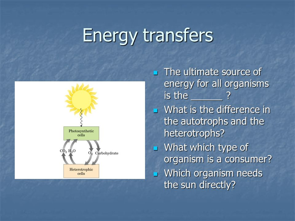Energy transfers The ultimate source of energy for all organisms is the ______ .