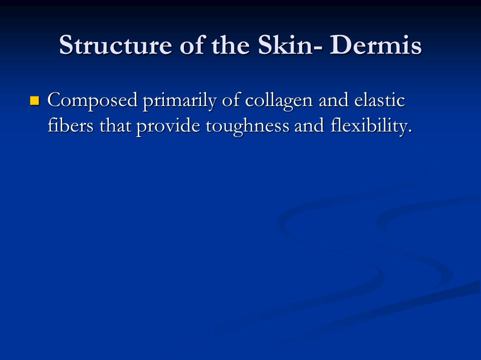 Structure of the Skin- Dermis Composed primarily of collagen and elastic fibers that provide toughness and flexibility.